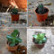 Assorted Set of 4 Hardy Indoor Succulent Plants