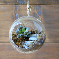 The Blooming Staircase Terrarium Kit