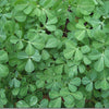 Fenugreek / Methi Seeds myBageecha - myBageecha