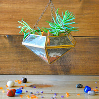 Floating Grasslands Terrarium Kit Decor myBageecha - myBageecha