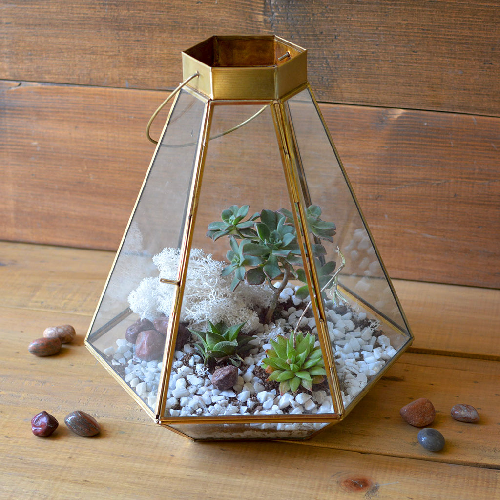 Frozen In Time Terrarium Kit