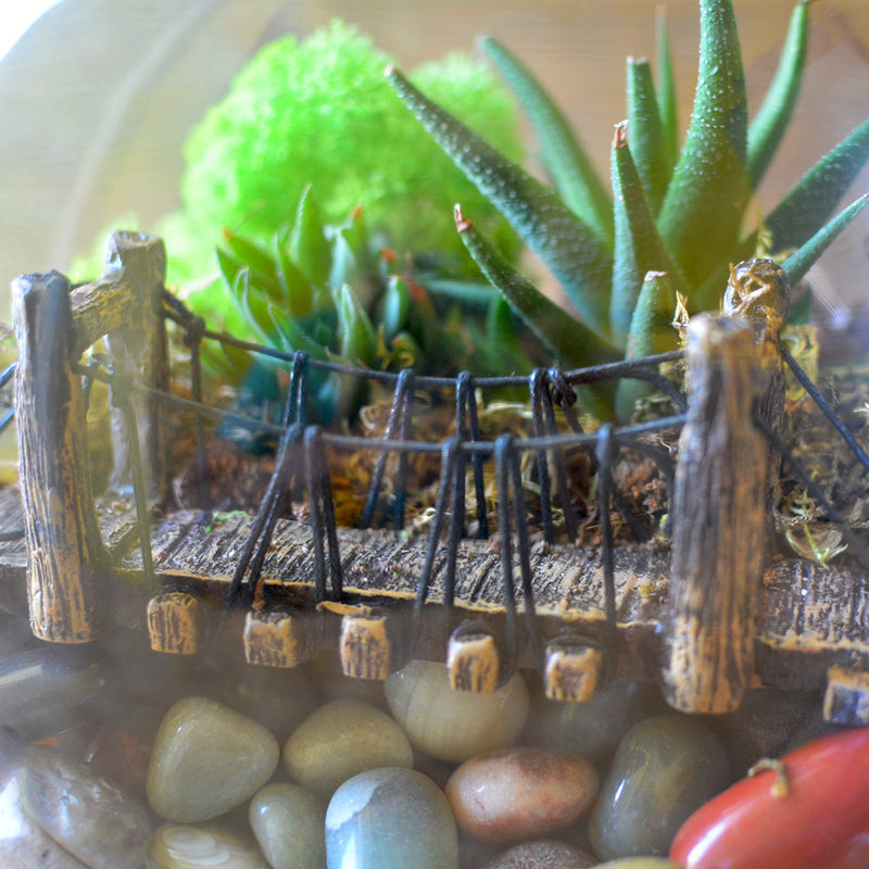 Into the Wild Terrarium Kit