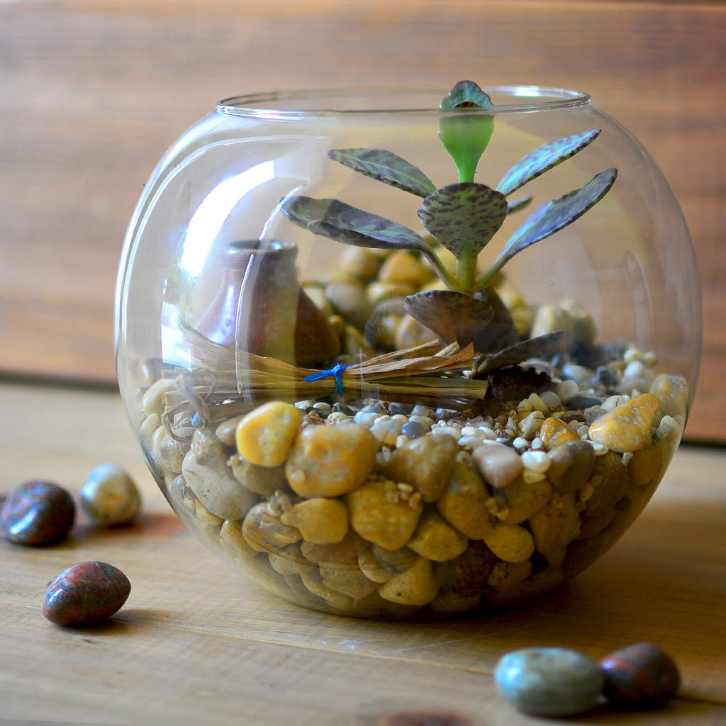 The Jaisalmer Ridge Terrarium Kit