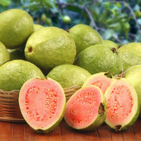Red Guava  (Tissue Culture)