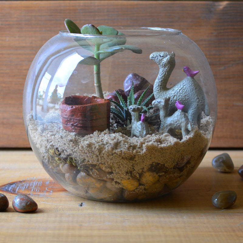 The Arid Mirage Terrarium Kit