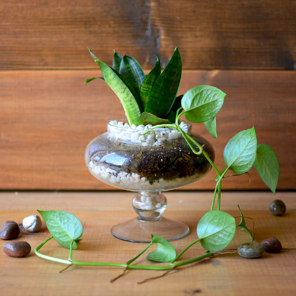 The Money Goblet Terrarium Kit