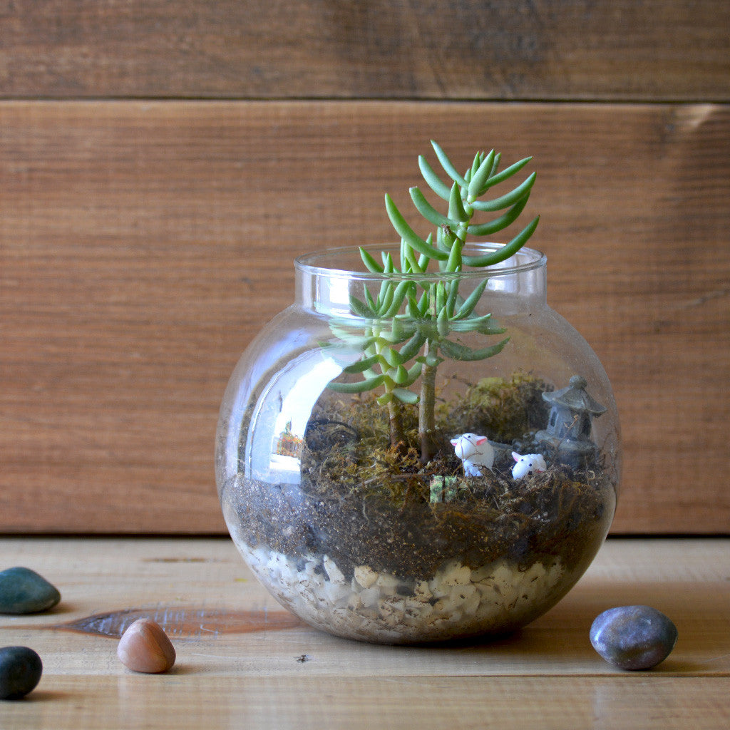 The Pine Woods Terrarium Kit Decor myBageecha - myBageecha
