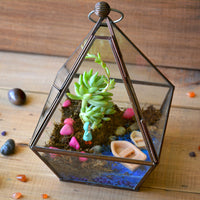The Jamaican Farewell Terrarium Kit Decor myBageecha - myBageecha