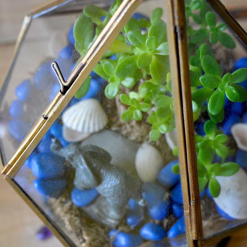 The Jungle Blues Terrarium Kit Decor myBageecha - myBageecha