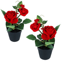 Red Rose With Plastic Pot  (Set of 2)