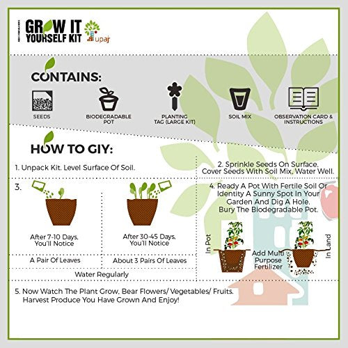 Ready To Grow Kits - Basil