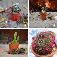 Set of 4 Assorted Cute Cactus Pack