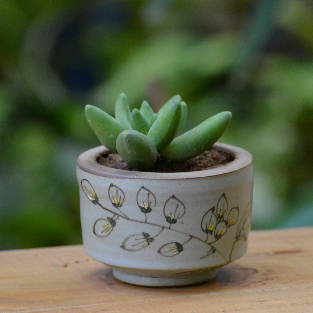 A Feather Imprint Ceramic Pot