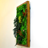 Fern Frenzy Moss Frame with Dark Wood