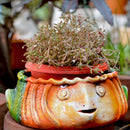 Terracotta Fish Planter