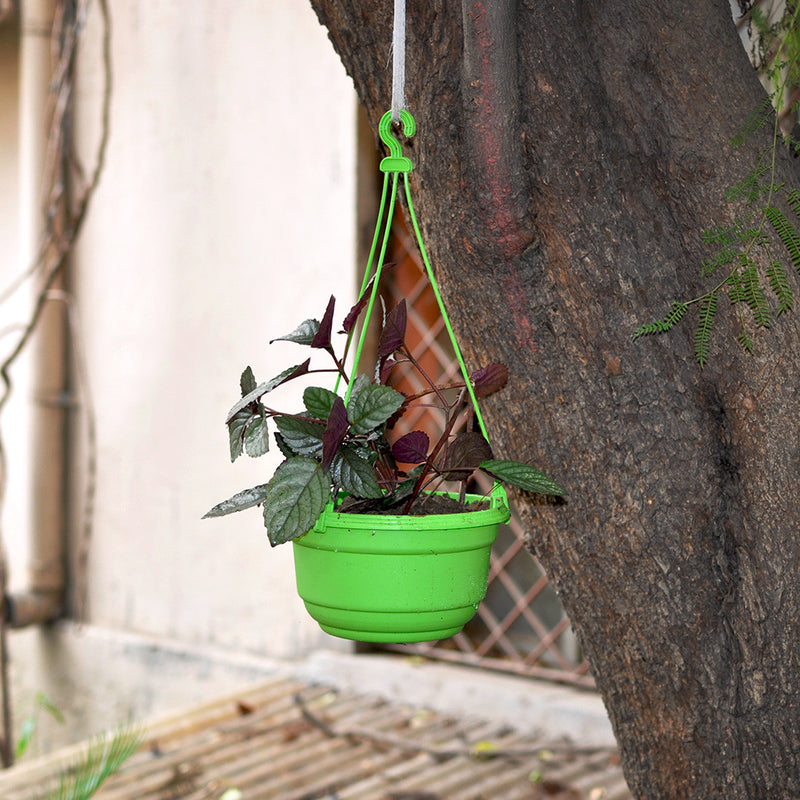 Set of 6 Multicolor Plastic Hanging Pots Garden Essentials myBageecha - myBageecha