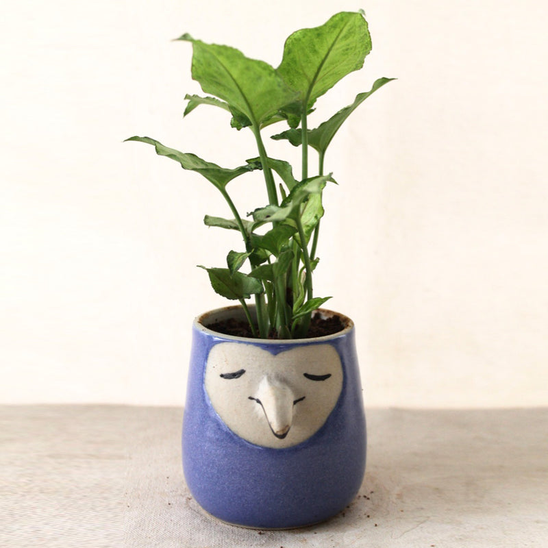 Humming Bird Blue Ceramic Pot