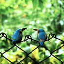 Peppy Pops - Kingfisher (A Pair) Decor myBageecha - myBageecha