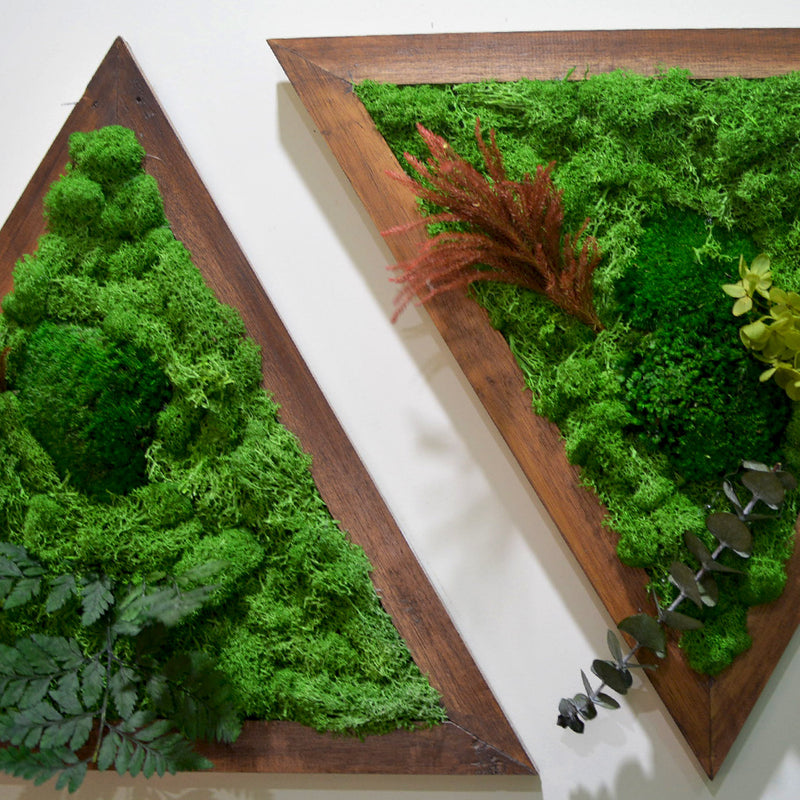 Like A Diamond Moss Frame with Dark Wood
