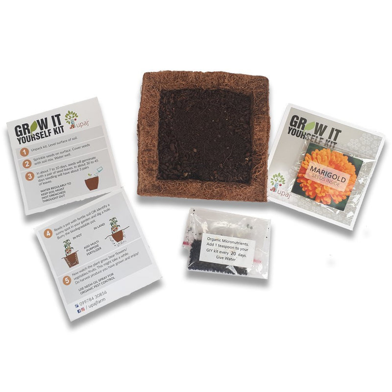 Ready To Grow Kits - Marigold