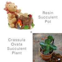 Set of Cute Lion Succulent Pot & Crassula Plant