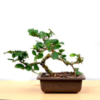 Bonsai Sandpaper
