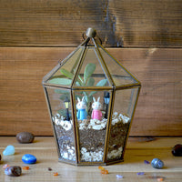 The Falcata Song Terrarium Kit Decor myBageecha - myBageecha