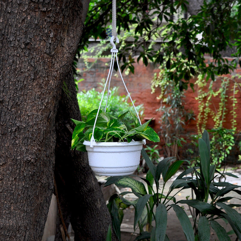 Set of 2 : Hanging White Pot Garden Essentials myBageecha - myBageecha