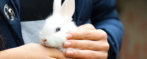 cruelty free hand lotion