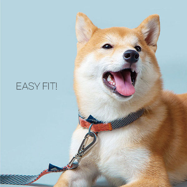 Easyfit Leash Lead Set