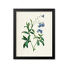 Champions Tee True forget-me-not flower art print GST