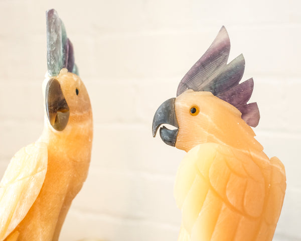 Discover something unique and be inspired by these magnificent hand carved, gold Onyx Cockatoos perched on an Amethyst stone with a custom Studio Maison Nurita brass base. Cockatoos are affectionate birds that are highly sociable and love to be around people. They even more striking in person.