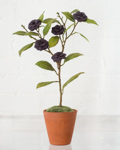 MEDIUM PURPLE CAMELLIA TREE