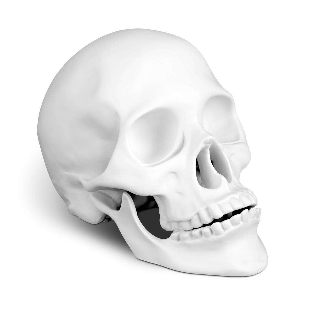 Skull - White - TERTIUS COLLECTION