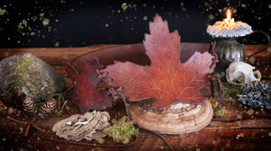 Maple Leaf Cincher