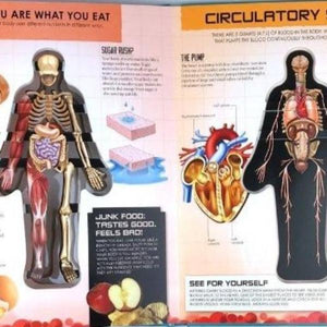 Anatomy of The Human Body 3D Picture Book