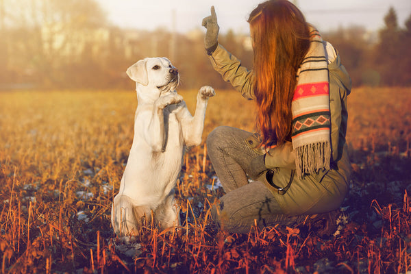Using Positive Reinforcement to Train Your Pup