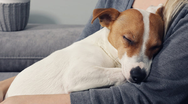 Why Dogs Like Sleeping on Their Owners