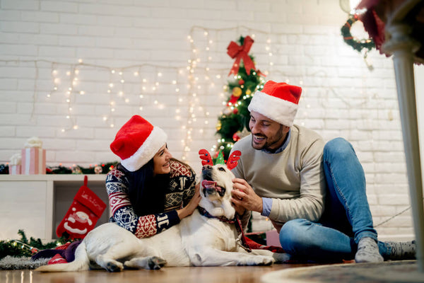 5 Steps to Having a Happy Healthy Holiday With Your Dog