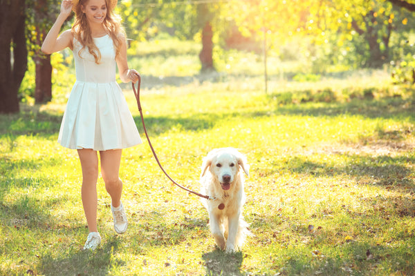 How to leash train your dog.
