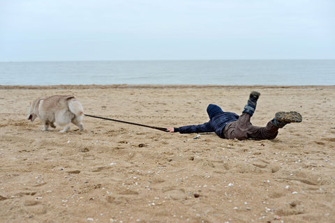 Boy being dragged across a beach by a dog.
