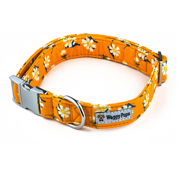 Apricot Daisy Dog Collar - Waggy Pups