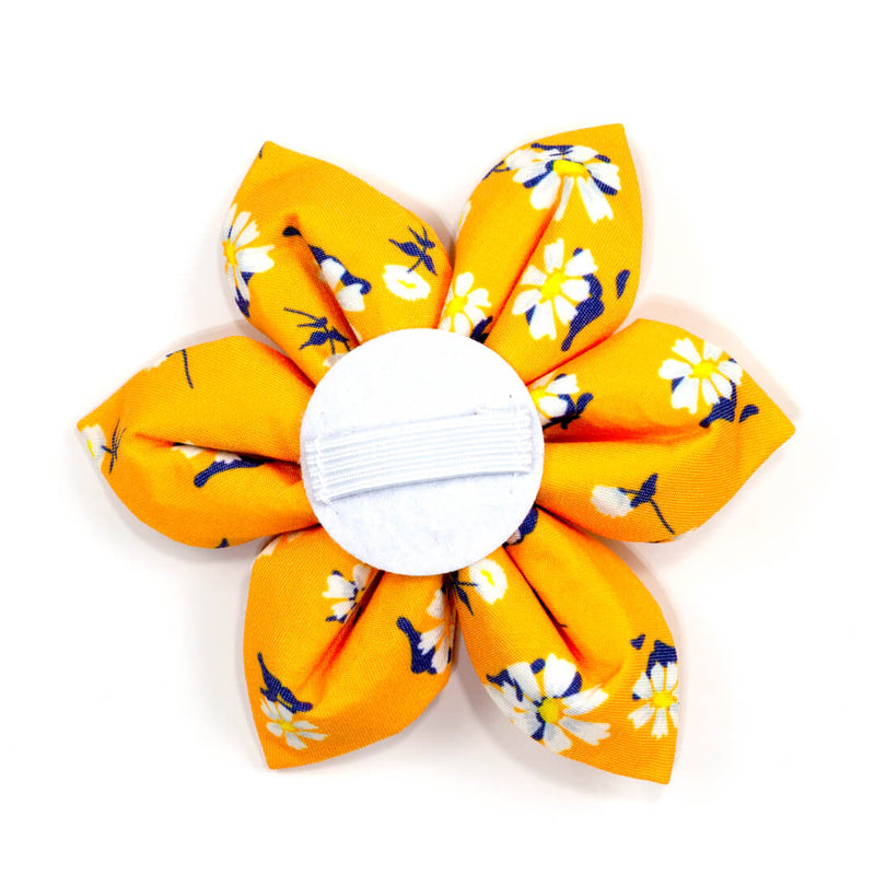 Apricot Daisy Dog Flower - Waggy Pups