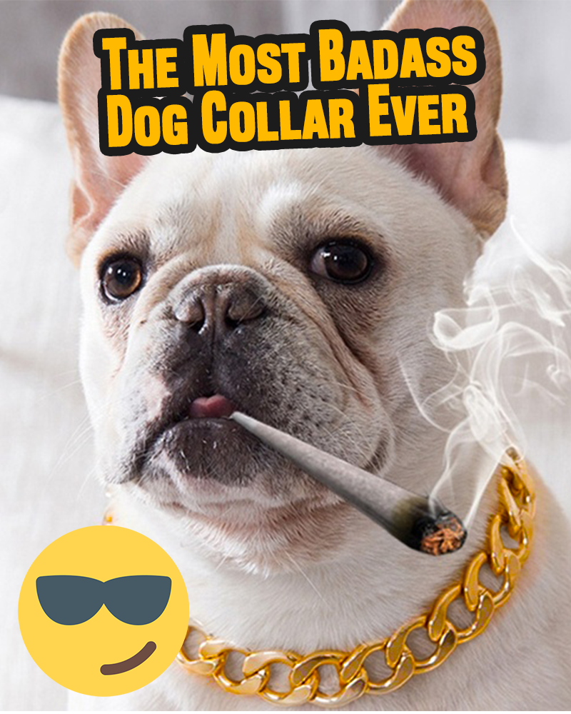 Gold Chain Dog Collar