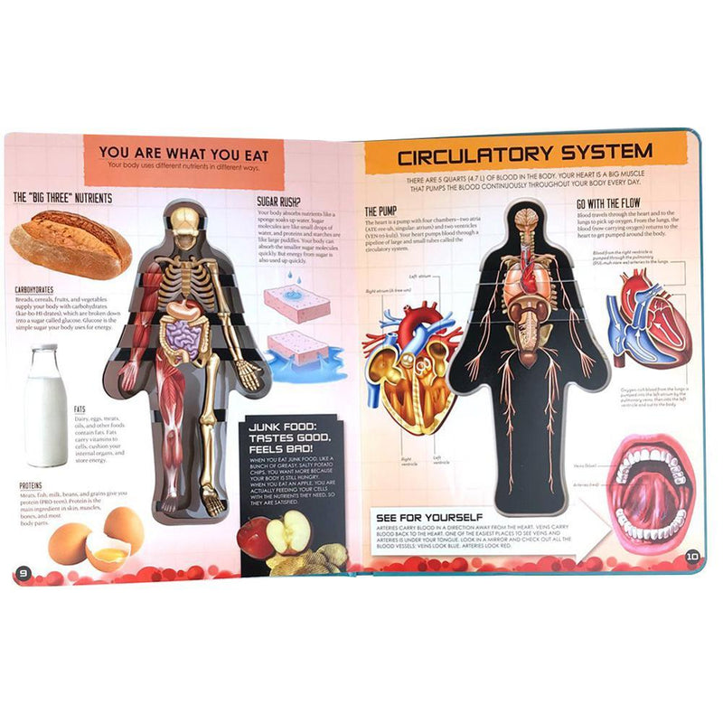 Anatomy of The Human Body Book 3D Picture Book