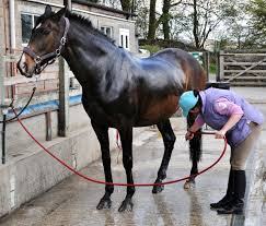 Equi9 Horse Shampoo - Cleaning Hub Centurion.Your Cleaning Supplies Company.