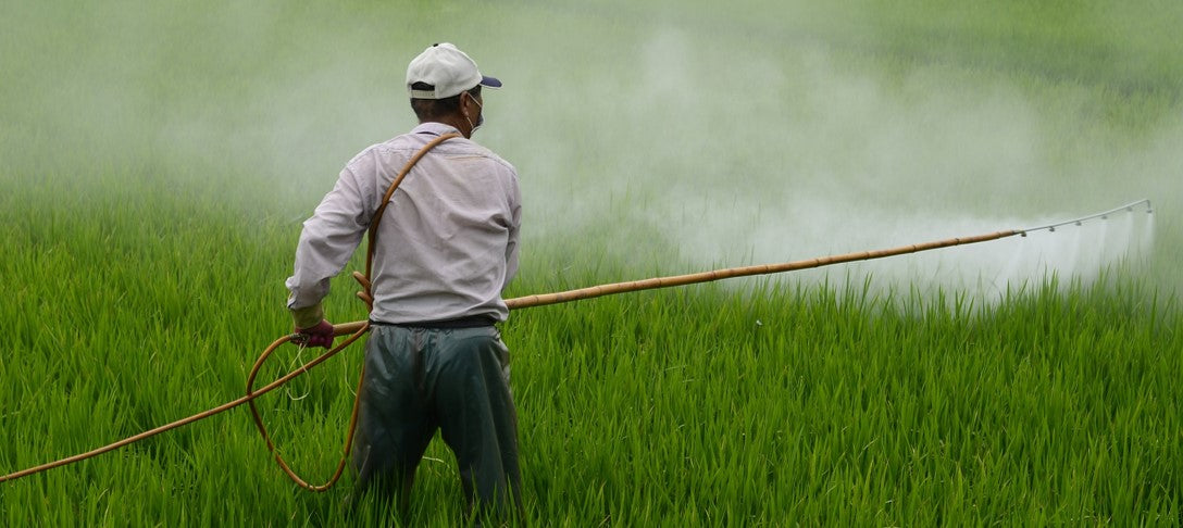 Farmworker applying herbicide to rice field