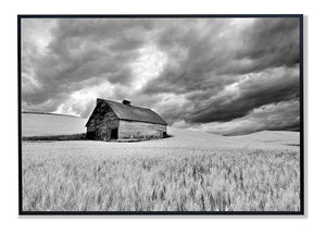 PhotoDF,    Barn in Wheat Field with Approaching Storm