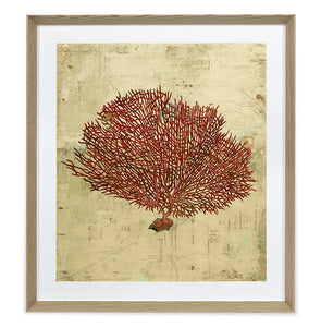 Sarah Atkinson, Red Sea Fan