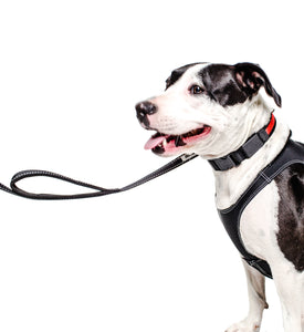 PRODOGG™ Dual Handle Nylon Leash 195202